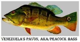 http://www.worldmeets.us/images/Peacock-bass_pic.jpg