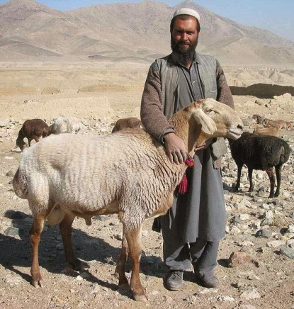 http://worldmeets.us/images/afghan-and-sheep_pic.png